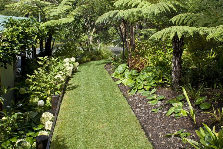 Grass pathway lined by tree ferns and clivia at Omaio garden, Matakana, New Zealand