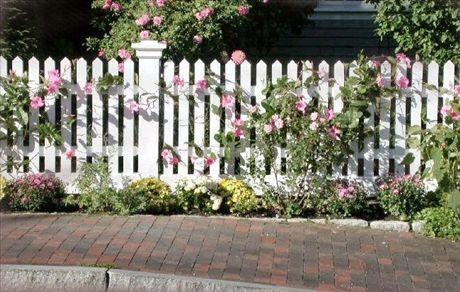 Klassiskt vitt staket framhäver blommorna