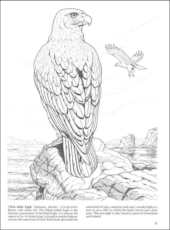 12 best coloring pages images on pinterest coloring for Birds of prey coloring pages