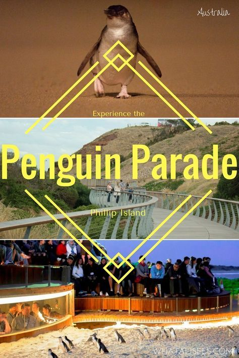 One of Australia's most popular wildlife experiences is the Penguin Parade at Phillip Island. Here's how to get the most out of your family visit.