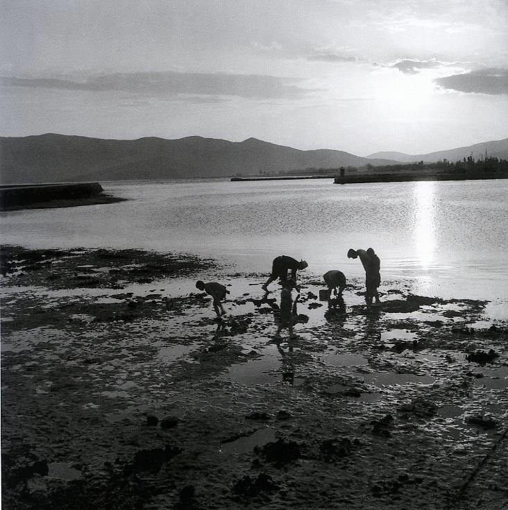 Μάζεμα καβουριών, Κάρυστος, 1950-55  Φωτογραφία: Βούλα Παπαϊωάννου  Φωτογραφικά Αρχεία Μουσείου Μπενάκη    Picking of crabs, Karystos island, 1950-55  Photograph by Voula Papaioannou  Benaki Museum - Photographic Archives