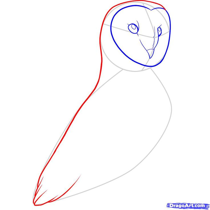 17 best images about art on pinterest how to draw for Steps to draw an owl