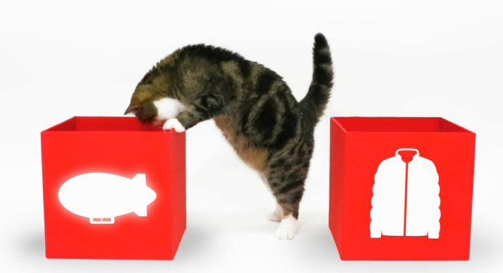 Il gatto Maru diventa protagonista della comunicazione di UNIQLO, un marchio di abbigliamento giapponese!  Mitico, adoro Maru ♥ e non perdetevi il video dei backstage... ;)