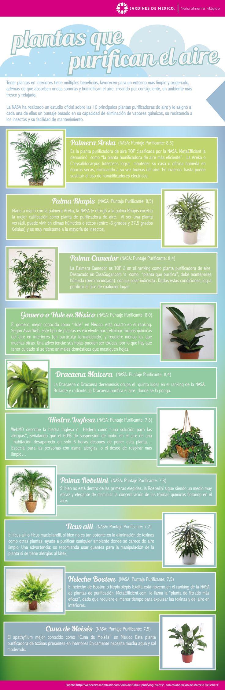 10 plantas purificadoras de aire para hogares y oficinas.  Artículo: http://jardinesdemexico.org/blog/?tag=purifica  #jardinería #plantas #salud