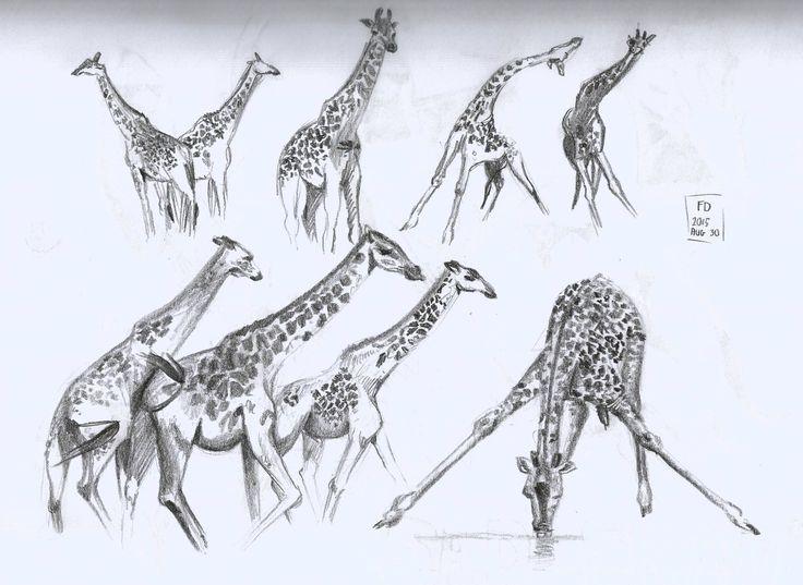 Giraffe sketches  / giraffe drawing pencil sketch /