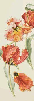 Parrot Tulips - tattoo inspiration.