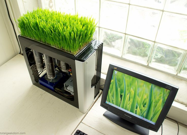 Growing grass on a computerDreams Bedrooms, Green, Minis Gardens, Growing Wheatgrass, Old Computers, Planters, Bio Computers, The Heat, Design