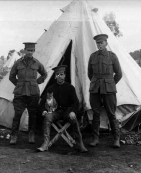 Many stories surround WWI legends but one you don't often hear is about the role animals played. Pigeons, cats and even glow worms made significant contributions on the WW1 battlefield.