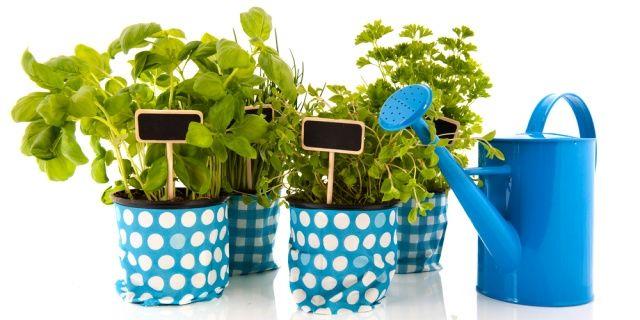 Pěstujete byliny? Nemáte-li zahradu, poslouží vám k tomu i balkon, či dokonce jen okenní parapet. Váháte, jaké bylinky vybrat? Inspirujte se seznamem deseti u nás nejpěstovanějších druhů, jež využijete při přípravě jídel i léčebných prostředků.