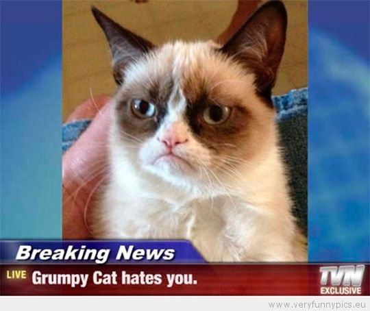 Grumpy Cat Birthday Youtube: 18 Best Images About Funny Cat Quotes On Pinterest