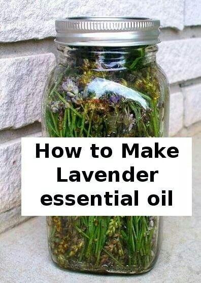 24 best Distilling Essential Oils images on Pinterest ...