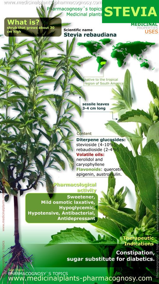Stevia benefits. Infographic. Summary of the general characteristics of the Stevia plant. Medicinal properties, benefits and uses more common of Stevia rebaudiana.