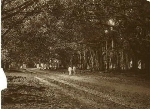 Waringin Land Bogor