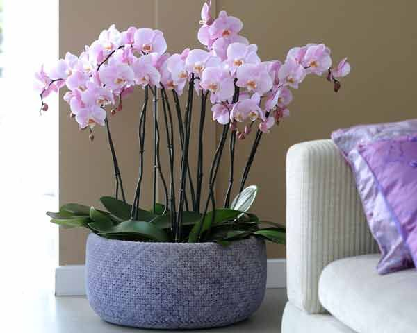 17 meilleures arrangements d 39 orchid es sur pinterest. Black Bedroom Furniture Sets. Home Design Ideas