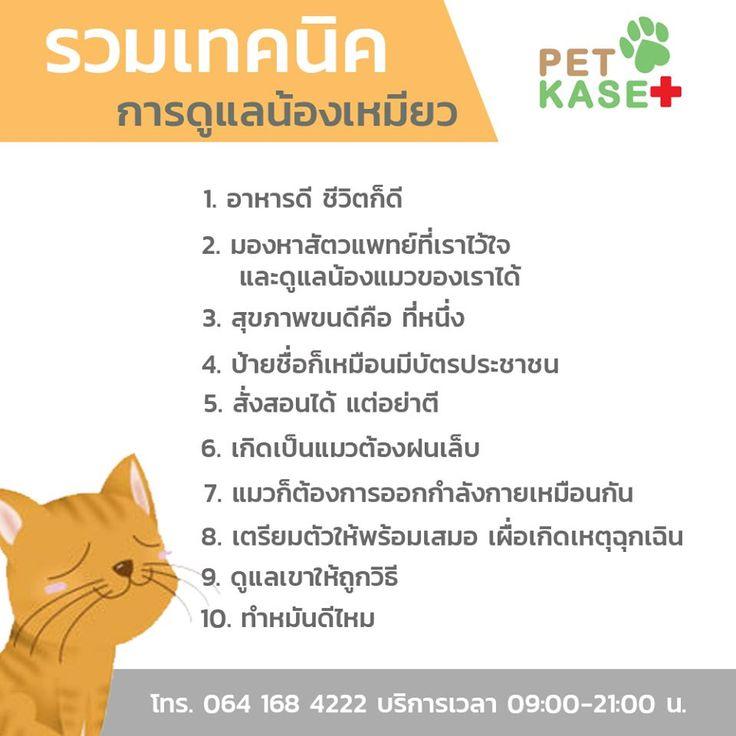 ป กพ นโดย โรงพยาบาลส ตว เพ ทเกษตร มหาช ย ใน ไข ห ดแมว