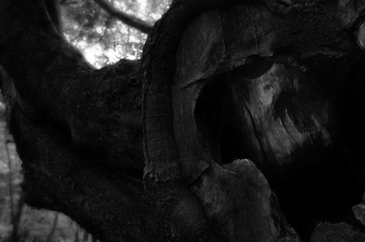 Creepy Skull Tree