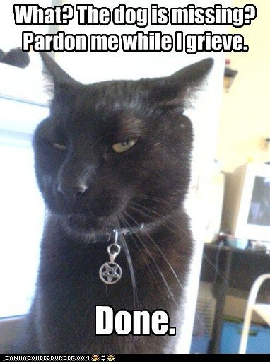 grieving kitteh.