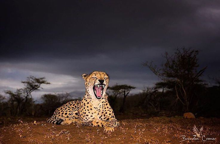 Stunning  photo by @brendoncremer    Use #ODPshutters to share your photography with Outdoorphoto   Be sure to check his account.  #wildlifephotography #wildandfree #wildlife_perfection #wildlifephotographer #naturelovers #natureza #nature_perfection #naturephotography #livingthedream