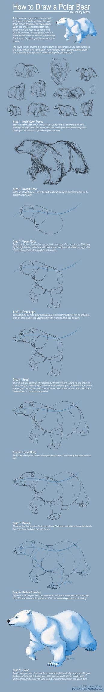 How to Draw a Polar Bear by ~LCibos on deviantART