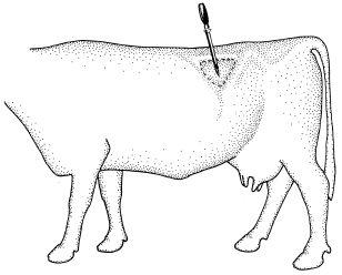 29 best cattle health