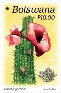 Thé de flore hoodia, à défaut...