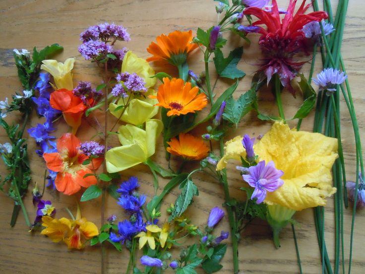 Edible plants: Van links naar rechts: rucola, komkommerkruid (blauw) met daaronder 1 viooltje, Oost-Indische kers, teunisbloem, korenbloem, goudsbloem, St. Janskruid, kaasjeskruid, bergamot, courgettebloem, bieslook