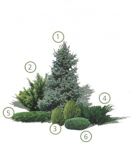 композиции из хвойных растений