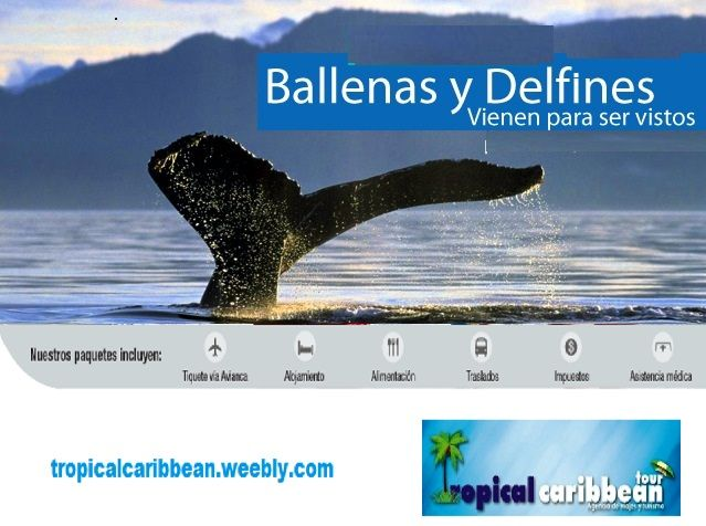 choco apartir de agosto llegan las ballenas gorobadas es un expectaculo presioso.  unico en colombia  aprovechemos para viajar  y conocer , el plan incluye tiquete aereo hotel, alimentacion, traslados impuestos. los interesados puedes reservar  en reservastropical caribbeatour@hotmail.com  wasath +573105941066 - cel 3015941066-3115429024
