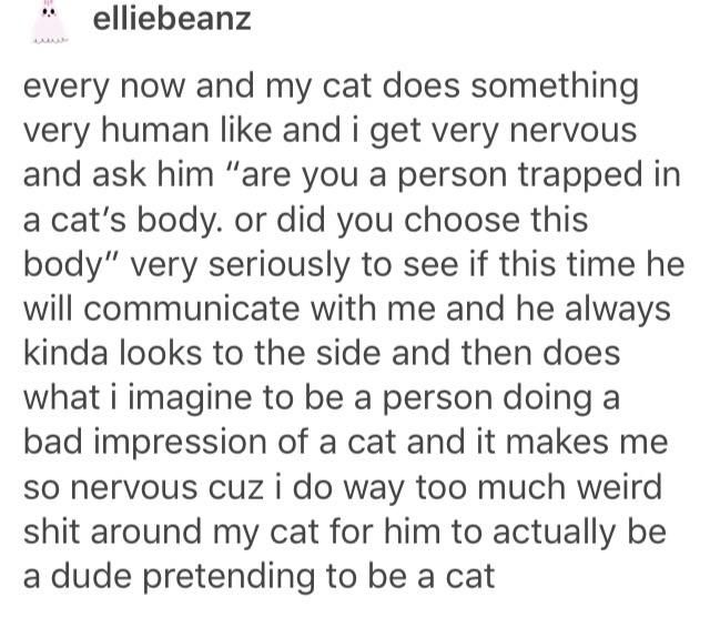 Are you a person trapped in a cat's body