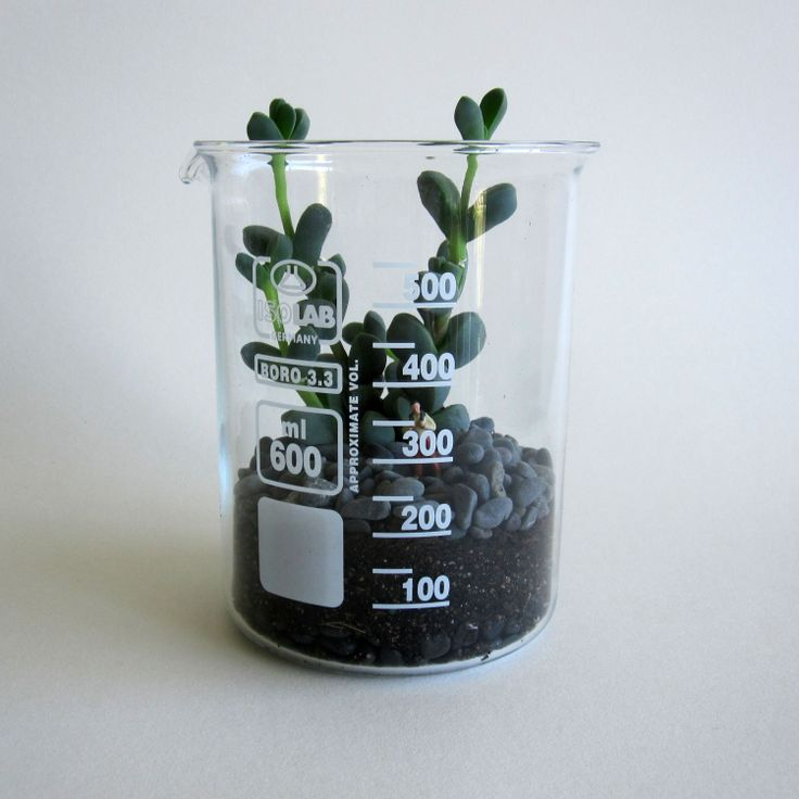 The easiest terrarium ever - one filled with a succulent within a large beaker.