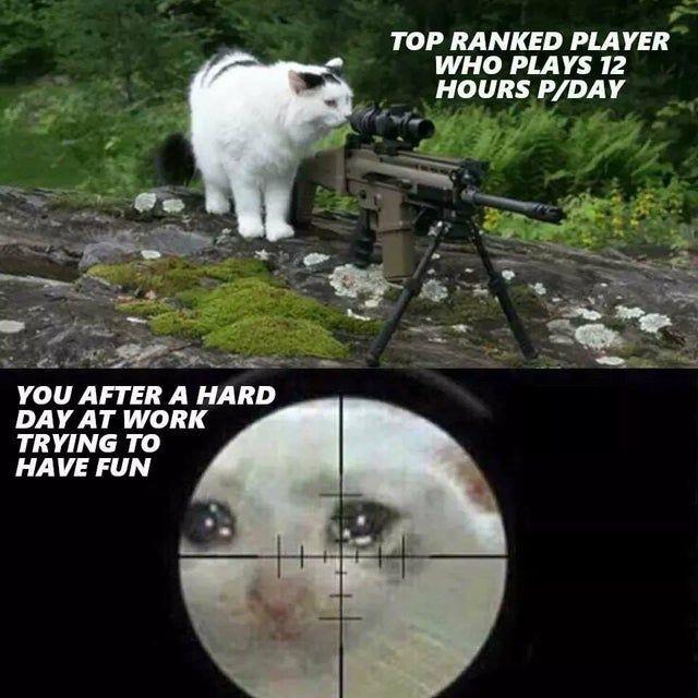 Cs Csgo Csgofunny Csgomemes Gaming Esports Funny Lol Rofl Memes Csgo Funny Pictures Memes Funny Memes
