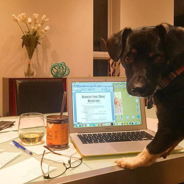 Celebrated Solidified Dog Training Online See This Training Your