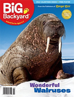 big backyard is national wildlife federation 39 s nature magazine for