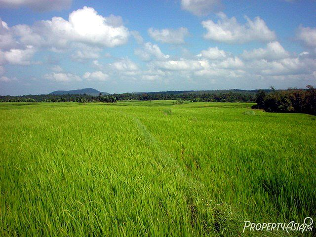 Newly posted: 31,667 sq.m. agricultural land for sale in Lucban, Quezon:  http://www.propertyasia.ph/property/12749/mountain-river-agri-resort-lucban-agriculture