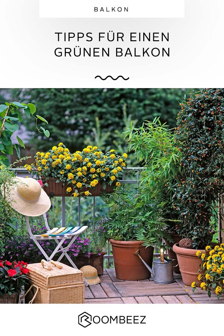 Balkonbepflanzung Tipps Fur Einen Grunen Balkon In 2020 Mit