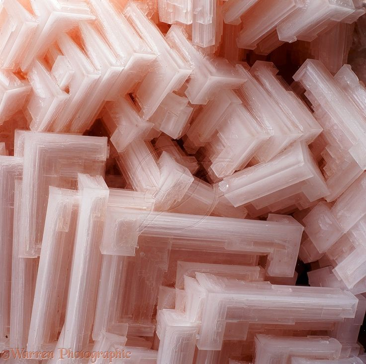 Hoppered Pink Halite macro. Salt crystals colored pink by carotene from organisms in the water in which the crystals grew.