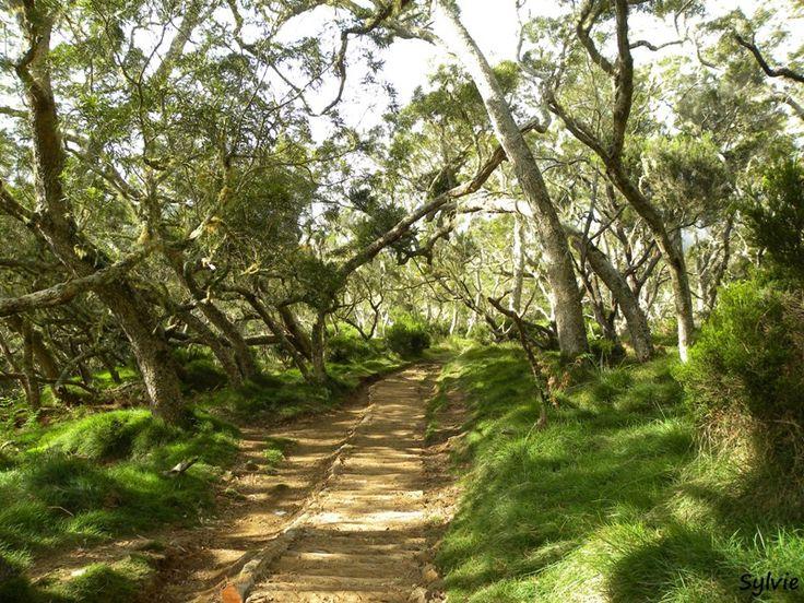 Plaine des Tamarins / Cirque de Mafate / Ile de la Réunion