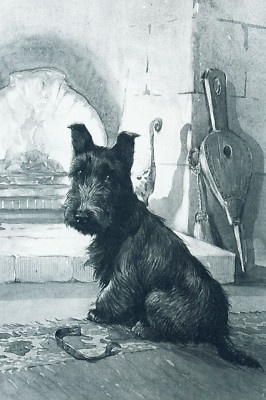 Scottish Terrier Dog 1920s A E Kennedy New Note Cards | eBay