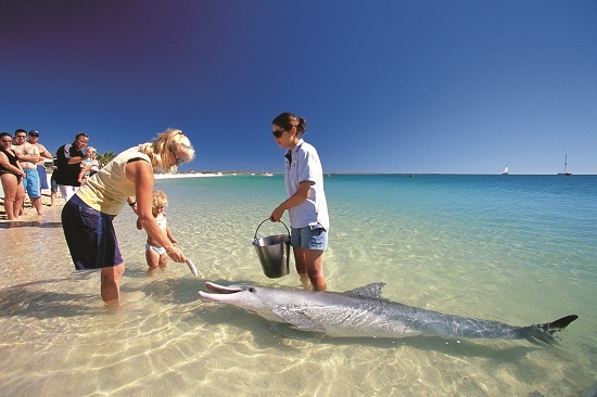 Feeding #dolphins at Monkey Mia Western #Australia
