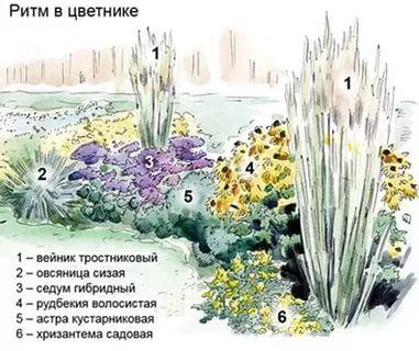 клумба непрерывного цветения из многолетников схемы: 16 тыс изображений найдено в Яндекс.Картинках