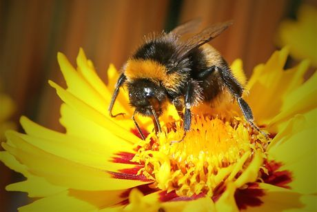 A new study shows that pollinator-friendly plants were pre-treated with neonicotinoid insecticides.