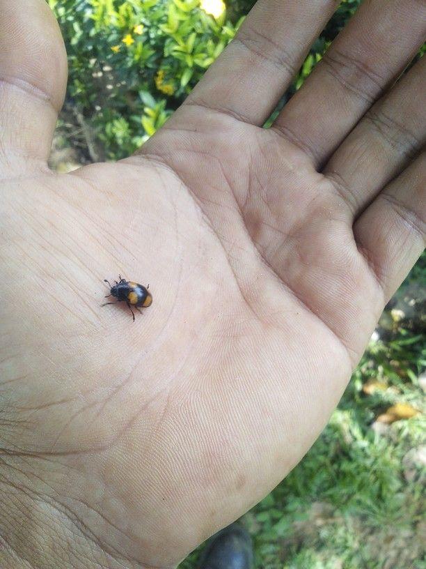 #bugworld