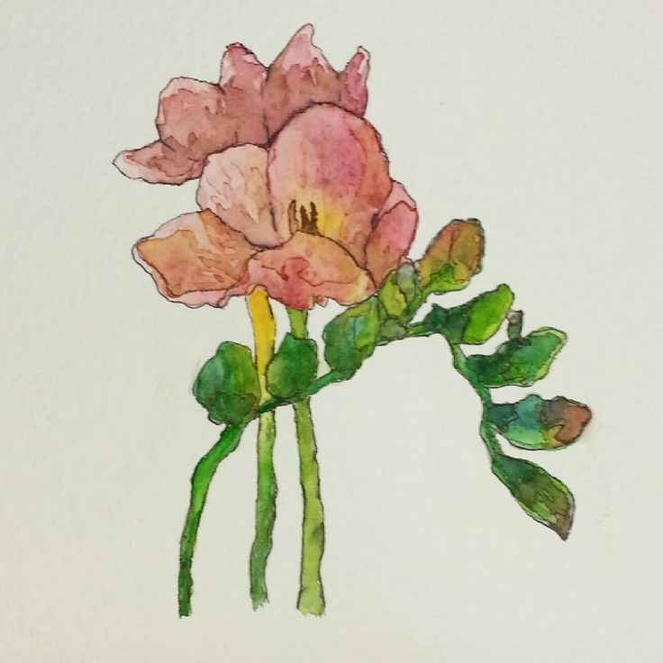 #freesia#watercolor#pen#red#green