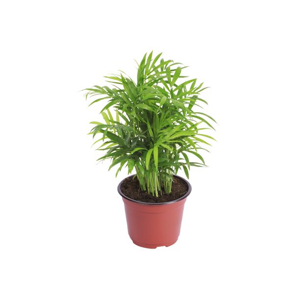 1000 images about plantas moss y kokedamas on pinterest - Plantas de sombra ...