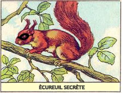 *Rook No. 17: recipes, crafts & whimsies for spreading joy*: Adventures in Lazertran -- or Secret Squirrel & the Custom Dinnerware DIY