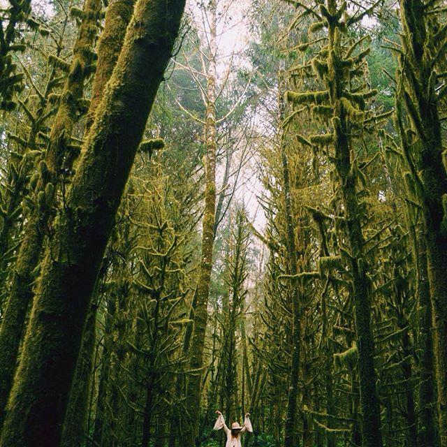 Wandering among giants Photo by @saigemeister