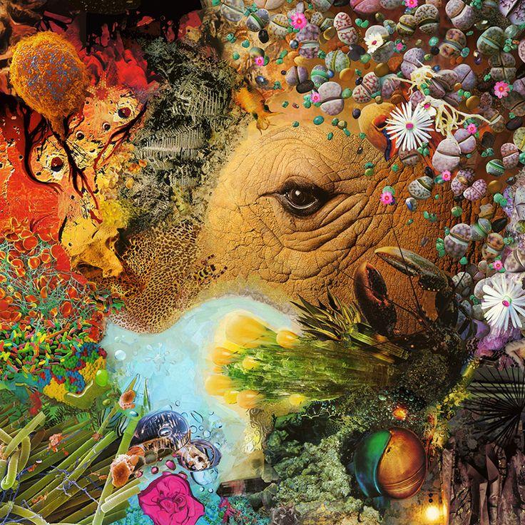 Pavel Shangin - Magazine Collage - Rhino's Eye (my favorite!)