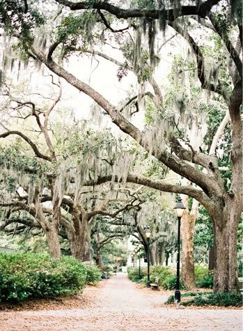 sweet southern trees