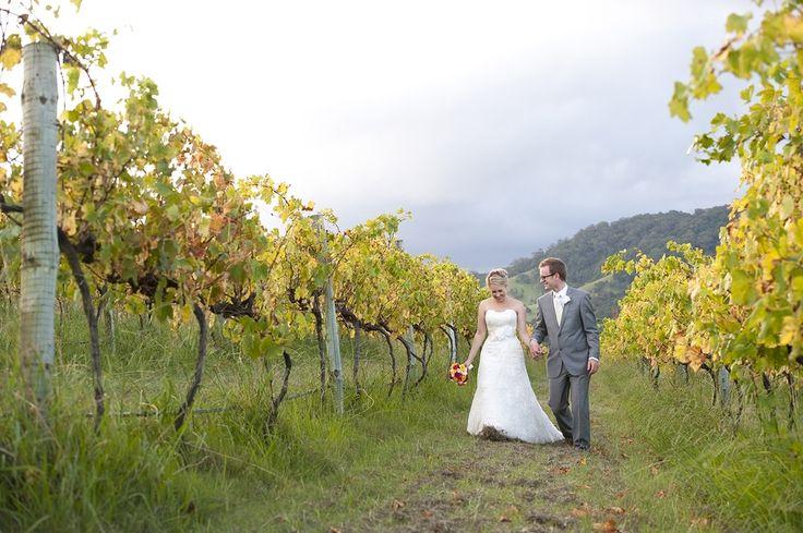 Aisle of vines