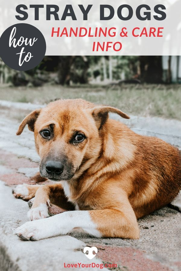Stray Dogs How To Help And Handle A Street Canine Dogs Dog